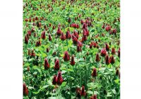 Care for Sale Near Me Beautiful Clover Plant Red Care Edible Plants for Sale Near Me – Persistencejs