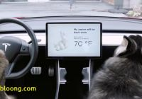 Tesla Dog Mode Beautiful Tesla Launches Dog Mode to Protect Your Pooch Carscoops