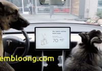 Tesla Dog Mode Beautiful Tesla Releases New Dog Mode for Pet Owners Mnn