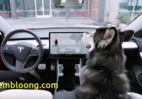 Tesla Dog Mode Fresh Teslas New Dog Mode is Just One Of Many Cool Features