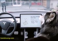 Tesla Dog Mode Inspirational Tesla Launches Dog Mode and Sentry Mode Across Lineup