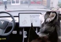 Tesla Dog Mode Lovely Tesla Releases Dog Mode to Keep Your Puppies Safe and