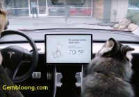 Tesla Dog Mode Unique Tesla Rolls Out Dog Mode Sentry Mode to Keep Your Car and