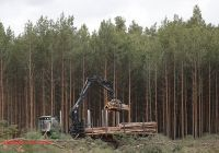 Tesla Germany Inspirational Tesla Wins Court Approval to Clear forest and Build